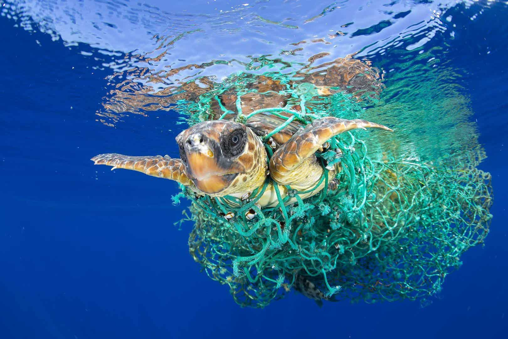 Drowning In Plastic. What Next?